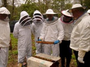 inter_bees