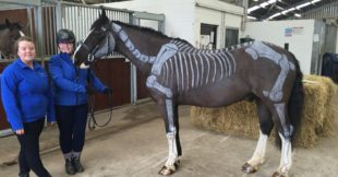 Painted horse showing skeleton at Enniskillen Campus