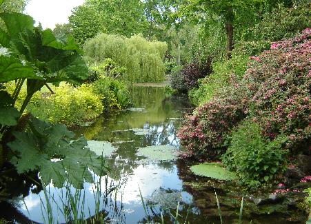 Wildlife pond at Greenmount Campus