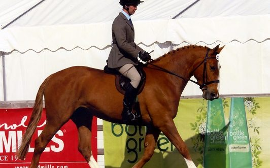 Horse in Show Ring