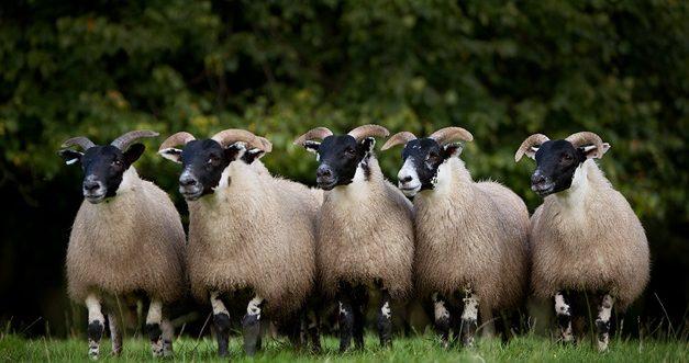 Sheep Dip Course