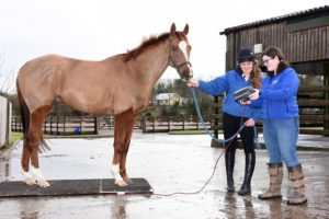 Equine Weight Management Project