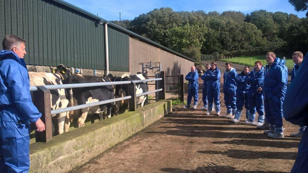Farmers observing a herd of cows in a fenced-off area
