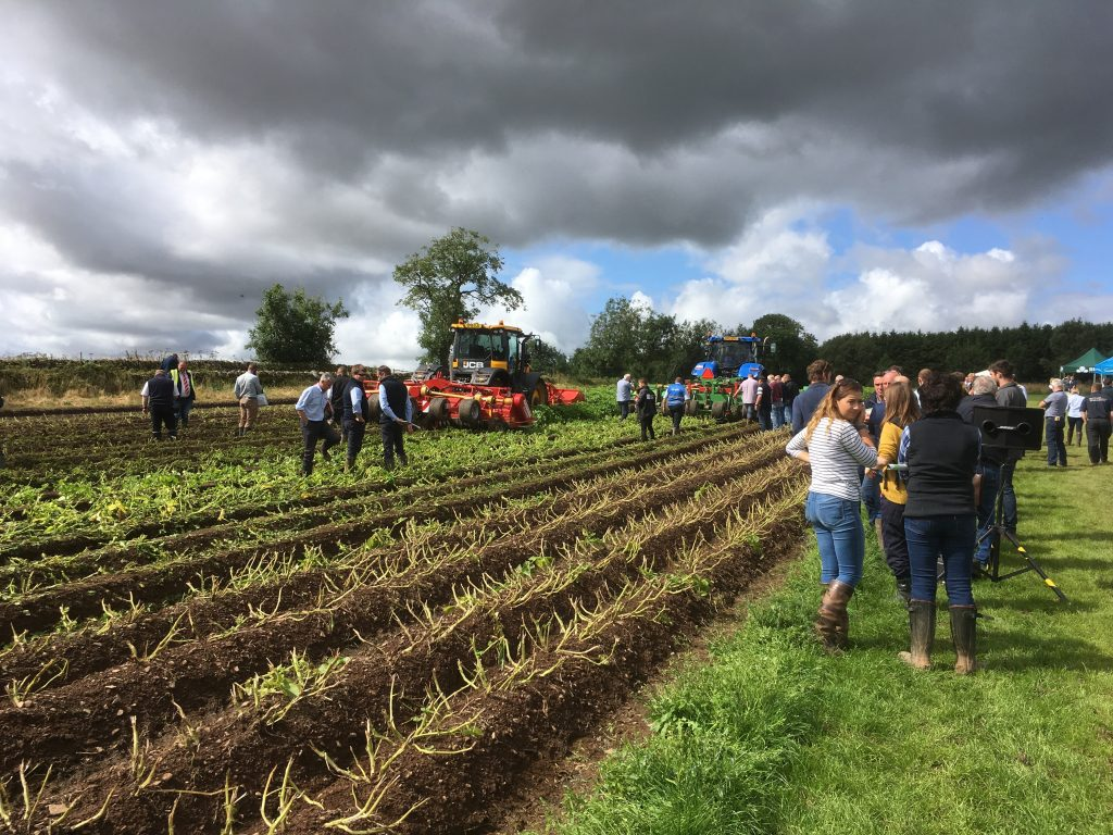 Triple-bed-haulm-flailers-at-potatoes
