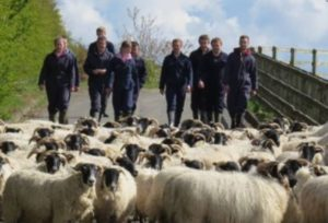 A group of people approaching a herd of sheep.