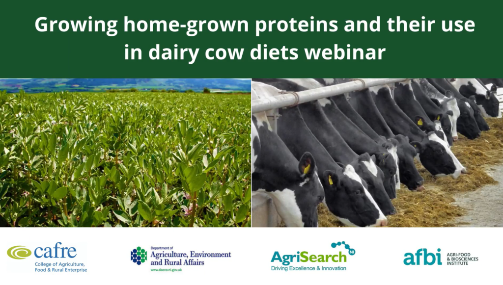 Growing home-grown proteins and their use in dairy cow diets event